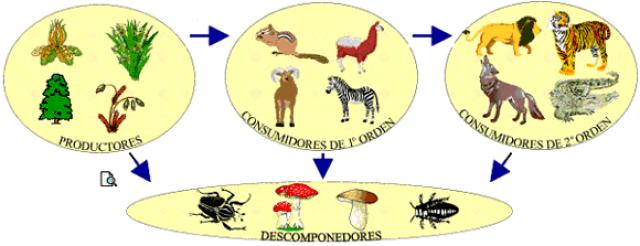Los ecosistemas 1