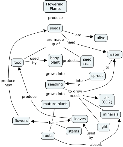 Flower Concept Map.Interviewer S Planning Concept Map What Are Seeds How Do Seeds