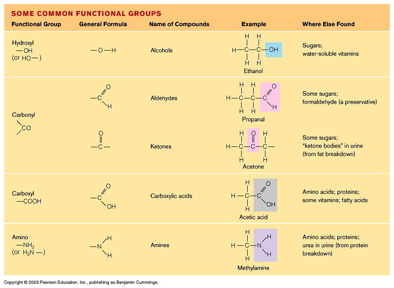 Macromolecules Concept Map Answers.Protein Concept Map Biology Www Bellissimonyc Com