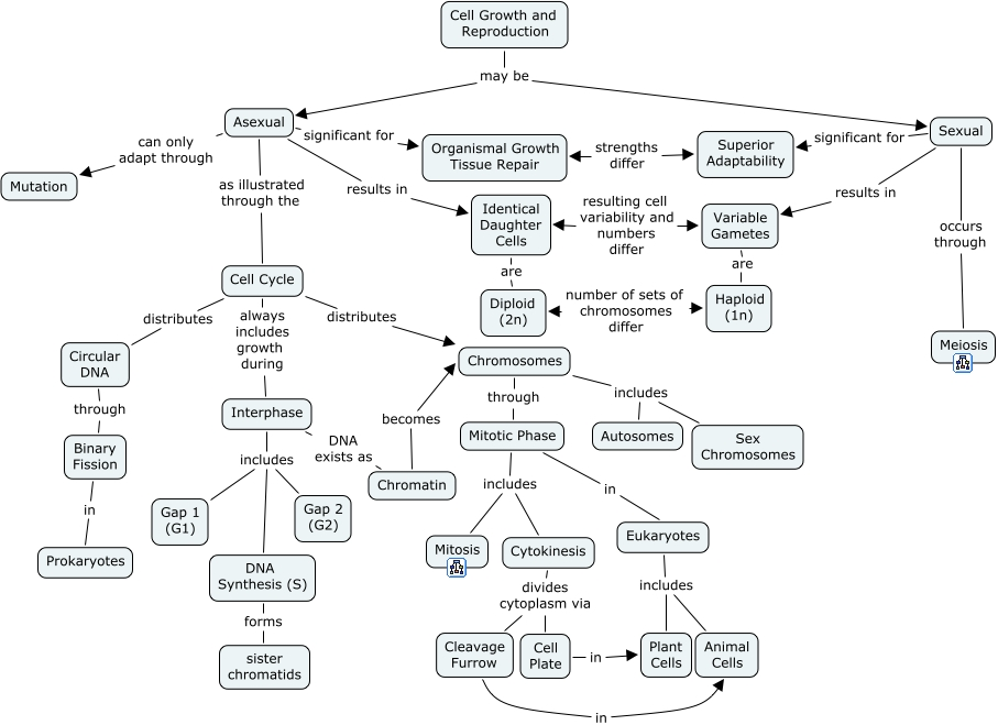 Cell Reproduction Concept Map | Rtlbreakfastclub