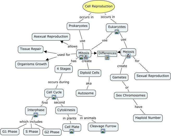 Cell Reproduction Ch