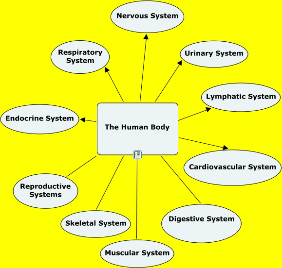 Human Body Systems What Are The Main Systems Of The Human Body