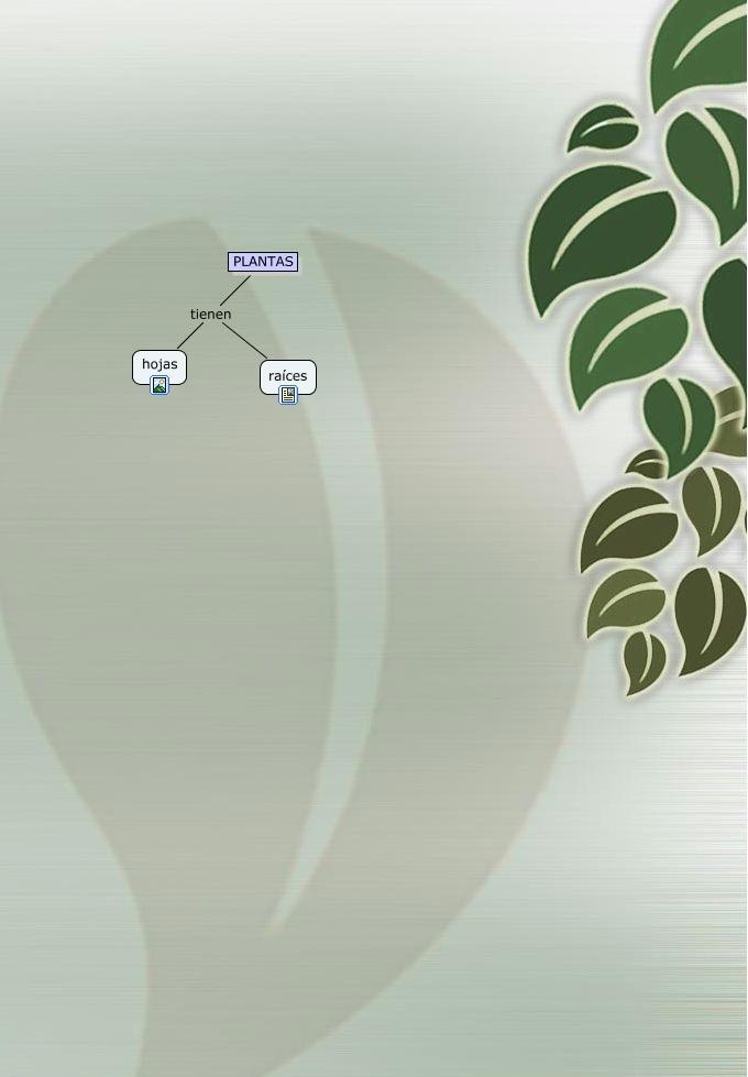 anatomía de las plantas - ¿Cuál es la anatomía de las plantas?