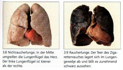Apparato respiratorio leo mappa concettuale - Sali da bagno droga effetti ...