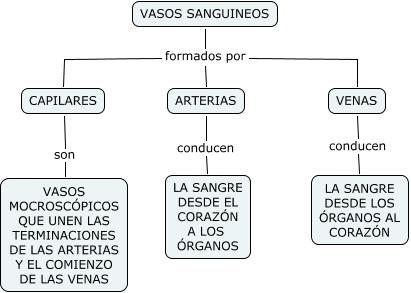 C.naturales-Vasos sanguineos