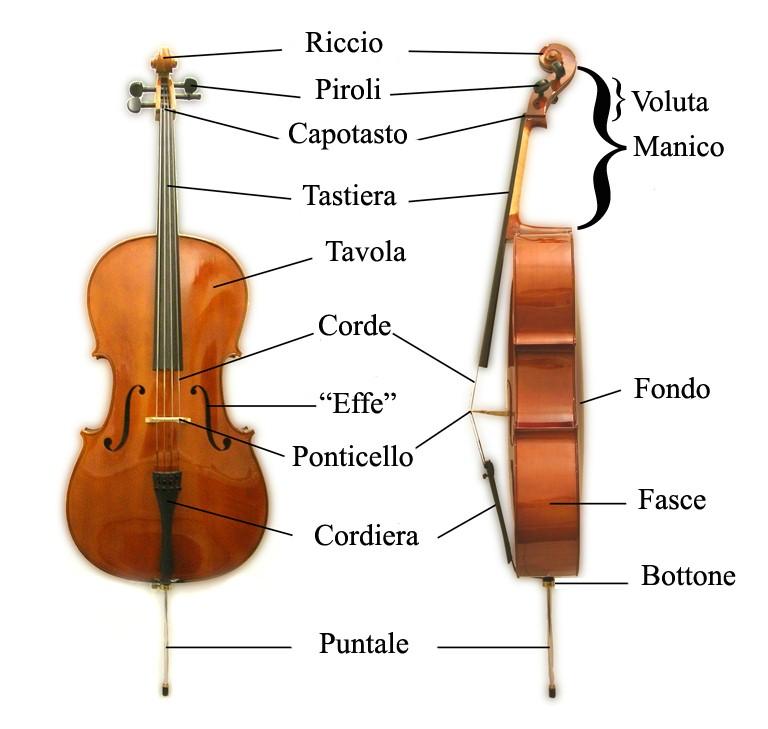 diagram of a cello la orquesta sinfonica a diagram of a cochlea spiral organ region of