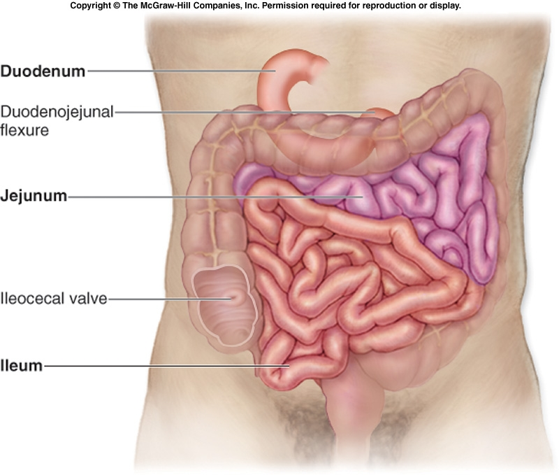 ihmc public cmaps 2 endocrine gland diagram labeled