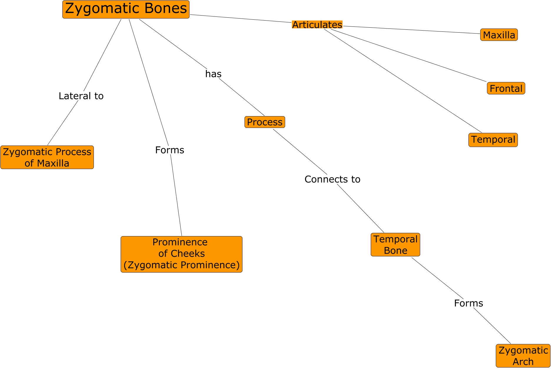 Anatomy - Zygomatic Bones