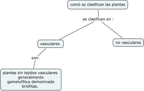 clasificacion de las plantas como se clasifican las plantas