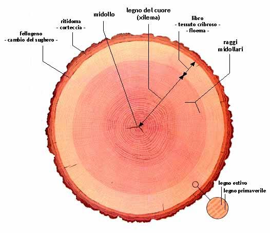 Legno mappa del legno for Tronco albero arredamento
