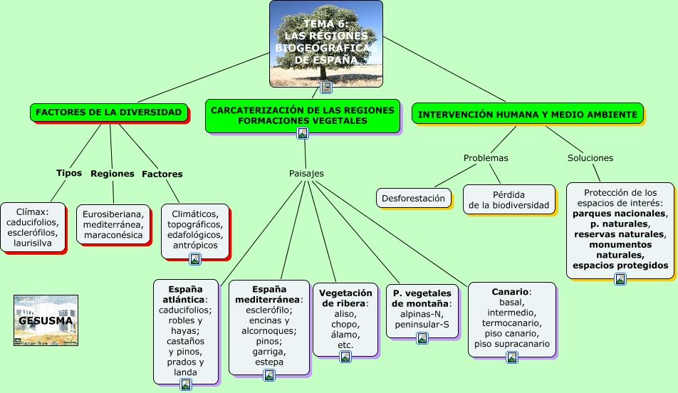 Tema 6 las regiones biogeogr ficas - Pisos en estepa ...