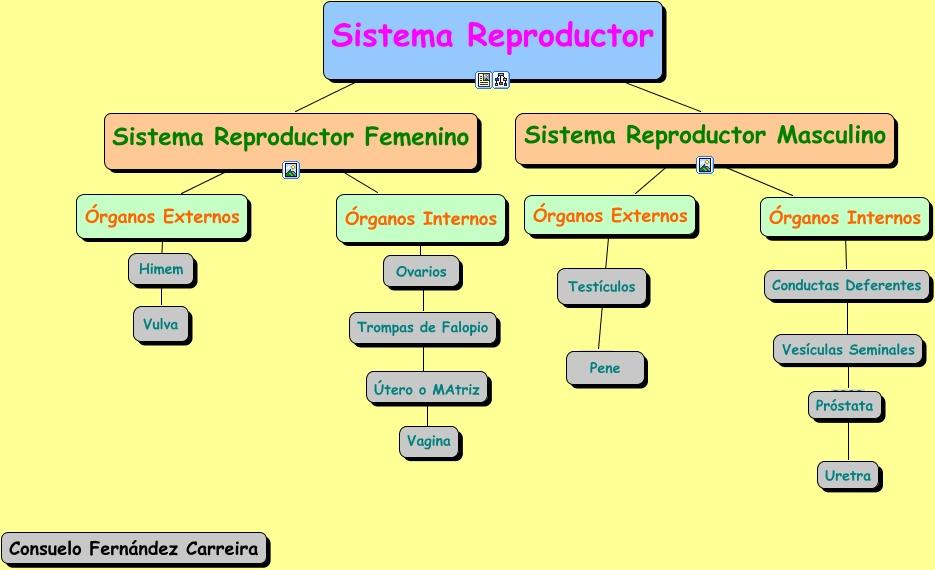 Famoso Sistema Reproductivo De La Hembra Humana Patrón - Anatomía de ...