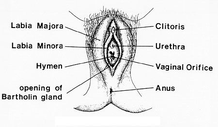 how to make your vagina hole tighter