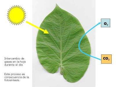 Las plantas - Libros vivos estructuras ...