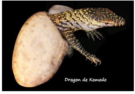 A 2 Z Reptiles Reproduccion an...