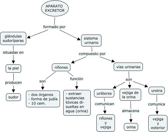 LA MINA .... 4º de PRIMARIA: EL APARATO EXCRETOR - MAPA CONCEPTUAL