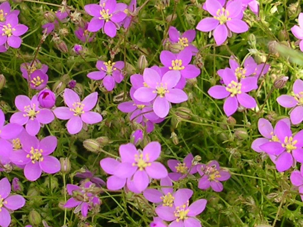 Plantas 1 - Tipos de flores silvestres ...