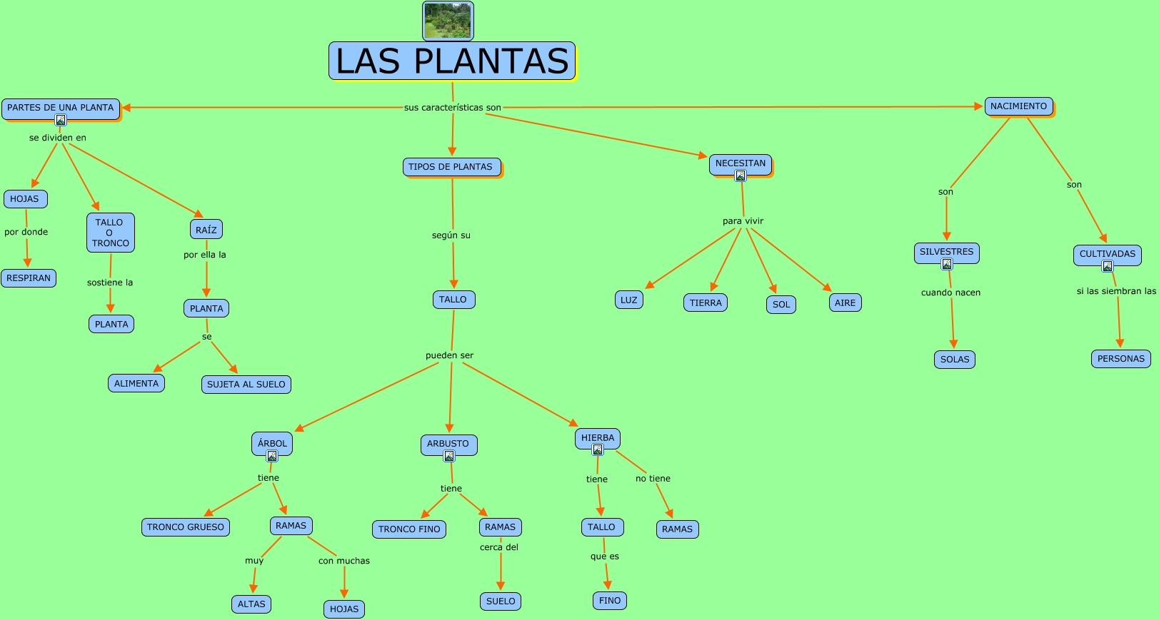 Plantas 1 for Tipos de arboles y sus caracteristicas