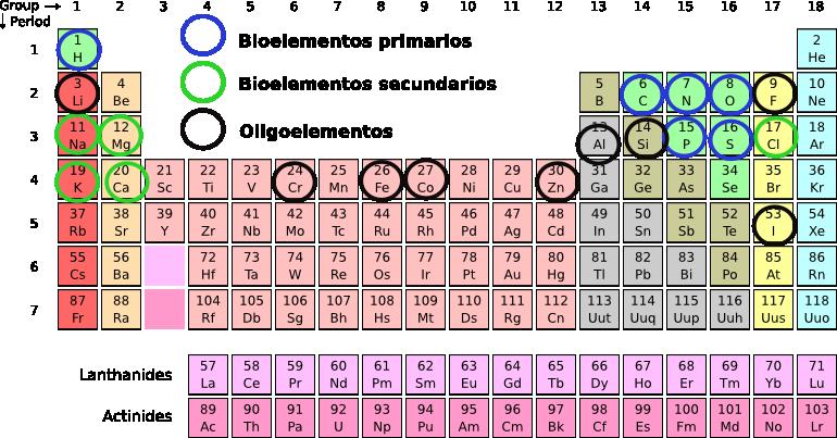 Bioelementos elementos biogenesicos los diferentes bioelementos se van agrupando constituyendo las biomolculas y formando la materia viva o protoplasma urtaz Images