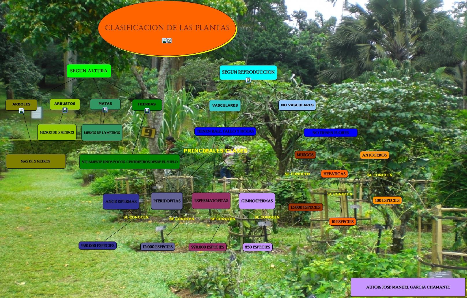 Clasificacion de las plantas - Especies de arbustos ...
