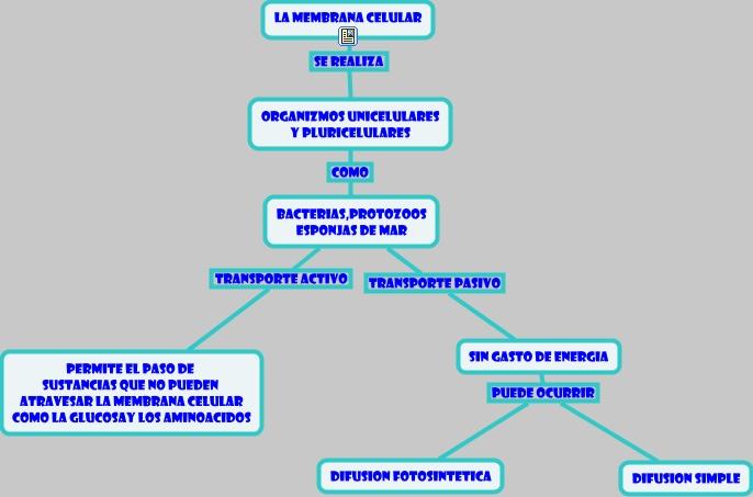 Biología Celular La Membrana Celular Estructura Y Función