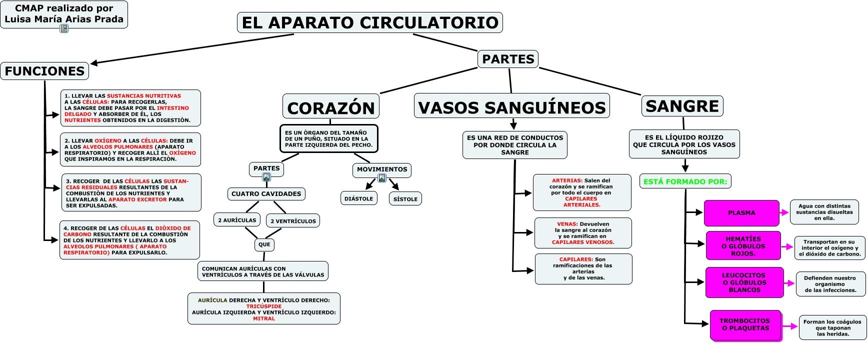 EDUCACIN PRIMARIA SISTEMA CIRCULATORIO