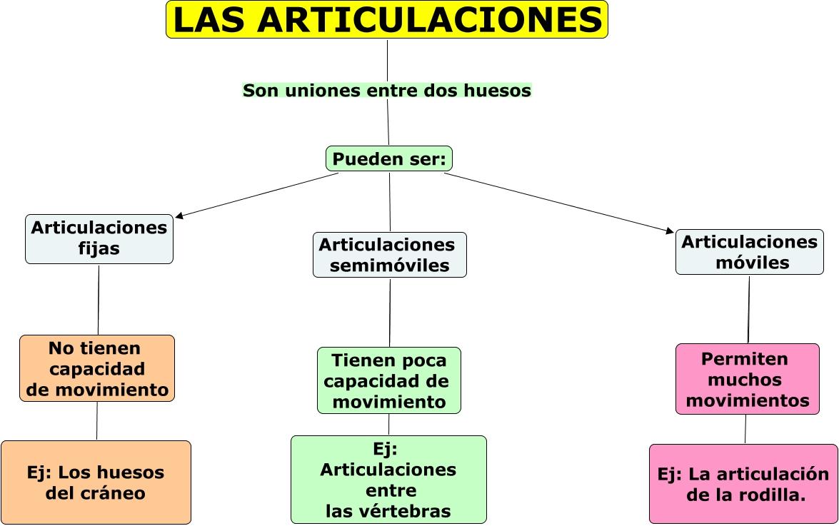 el blog de arcicarmen: TEMA 2. APARATO LOCOMOTOR. LAS ARTICULACIONES.