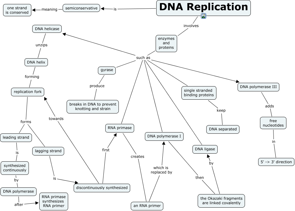 concept map of gene genome protein and dna relationship
