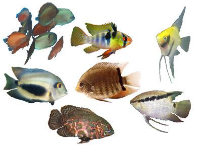Ihmc public cmaps 2 for Variedad de peces