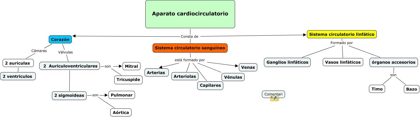 Aparato cardiocirculatorio - ¿De qué partes consta el aparato ...