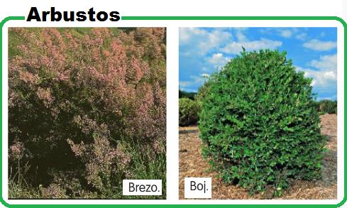 Partes de las plantas partes de las plantas - Plantas y arbustos de exterior ...