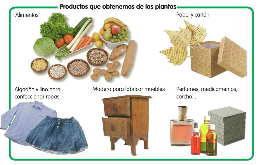 Utilidad de las plantas  PARTES DE LAS PLANTAS
