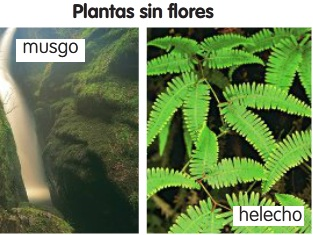 5 merche las plantas for Plantas sin semillas