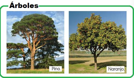 Partes de las plantas partes de las plantas - Arbustos nombres ...