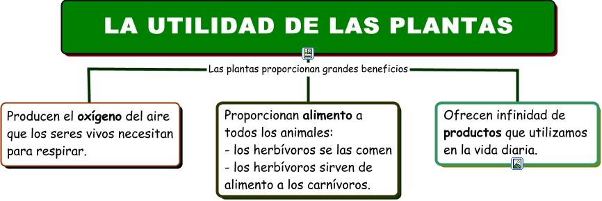 Utilidad de las plantas partes de las plantas for Utilidad de las plantas ornamentales