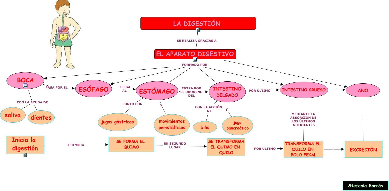 Moderno Fotos Del Sistema Digestivo Para Niños Elaboración ...