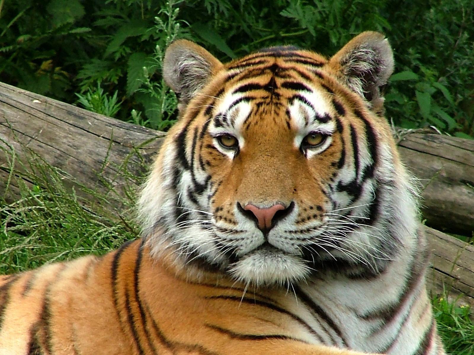Animales: 96082607738