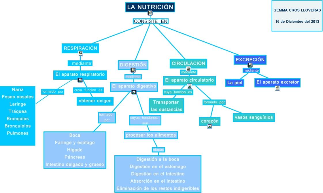 mapa conceptual la nutrición gemma cros
