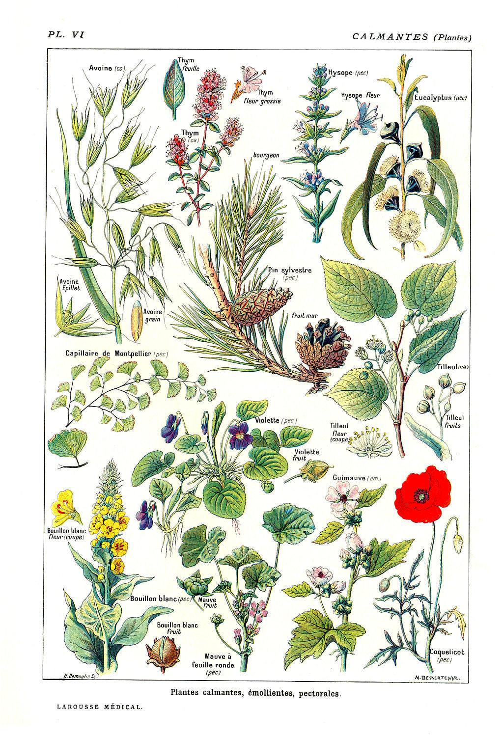 Las plantas ruben for Tipos de hierbas medicinales