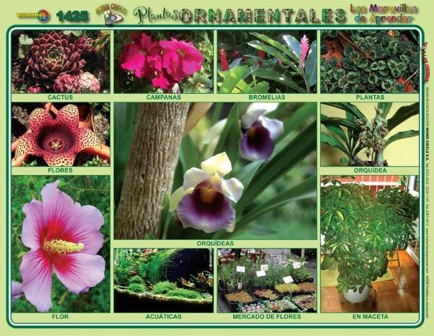 Las plantas ruben for Todas las plantas son ornamentales