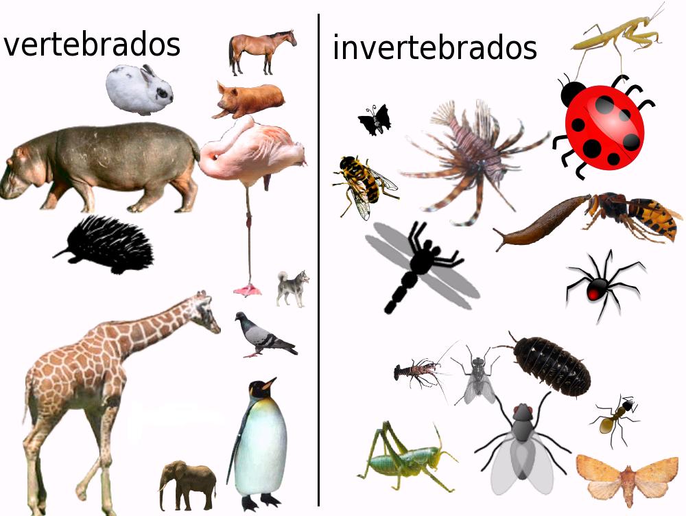Dibujos Para Colorear De Animales Invertebrados Y Vertebrados: Los Animales