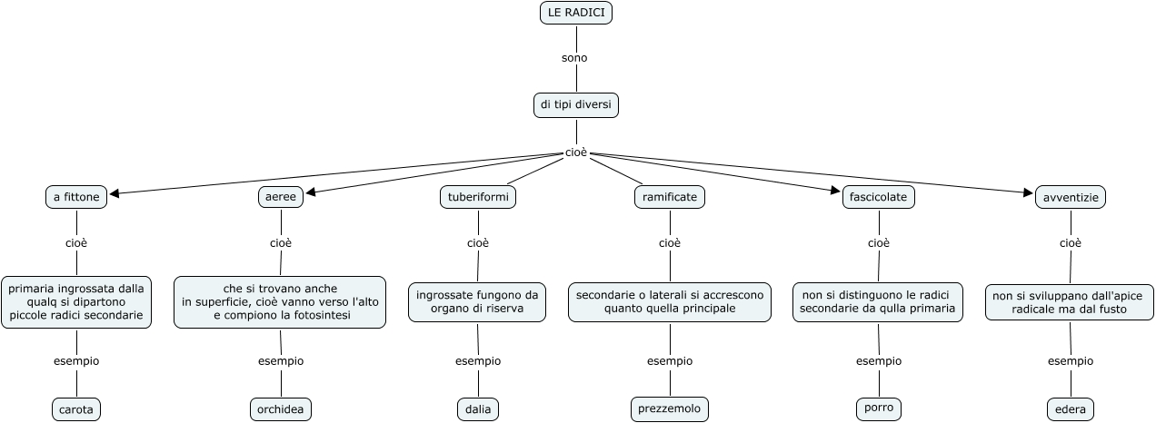 I vari tipi di radice mappa concettuale - Diversi tipi di api ...