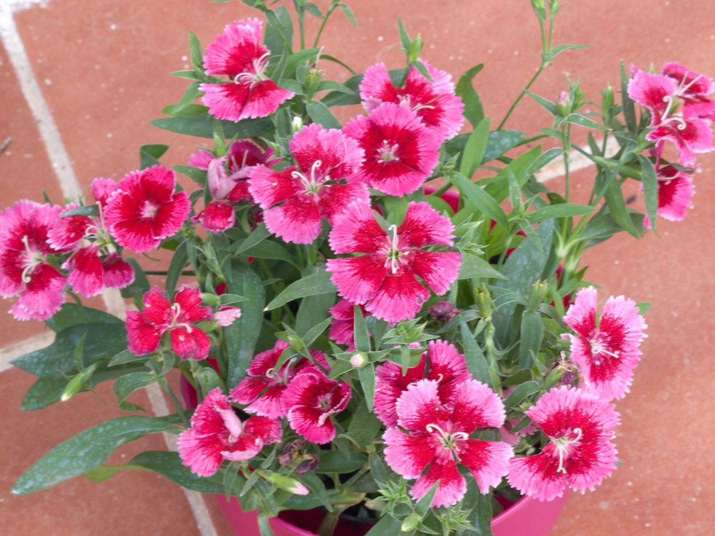 Las plantas - Plantas de exterior con flor ...