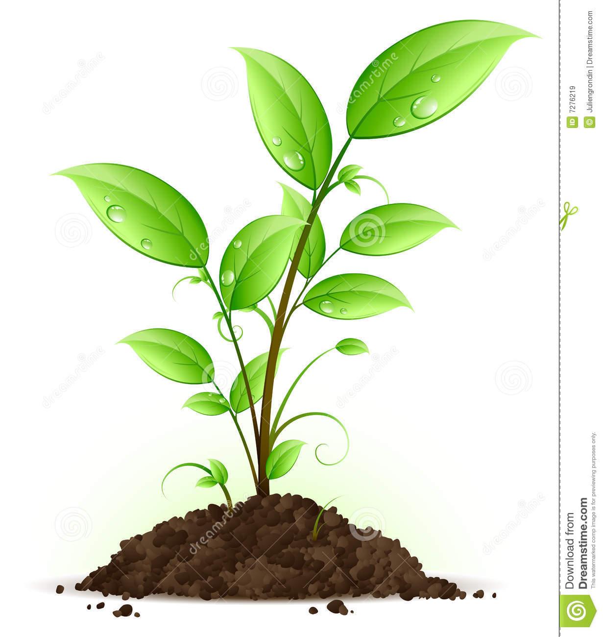 ihmc public cmaps 2 On plantas plantas
