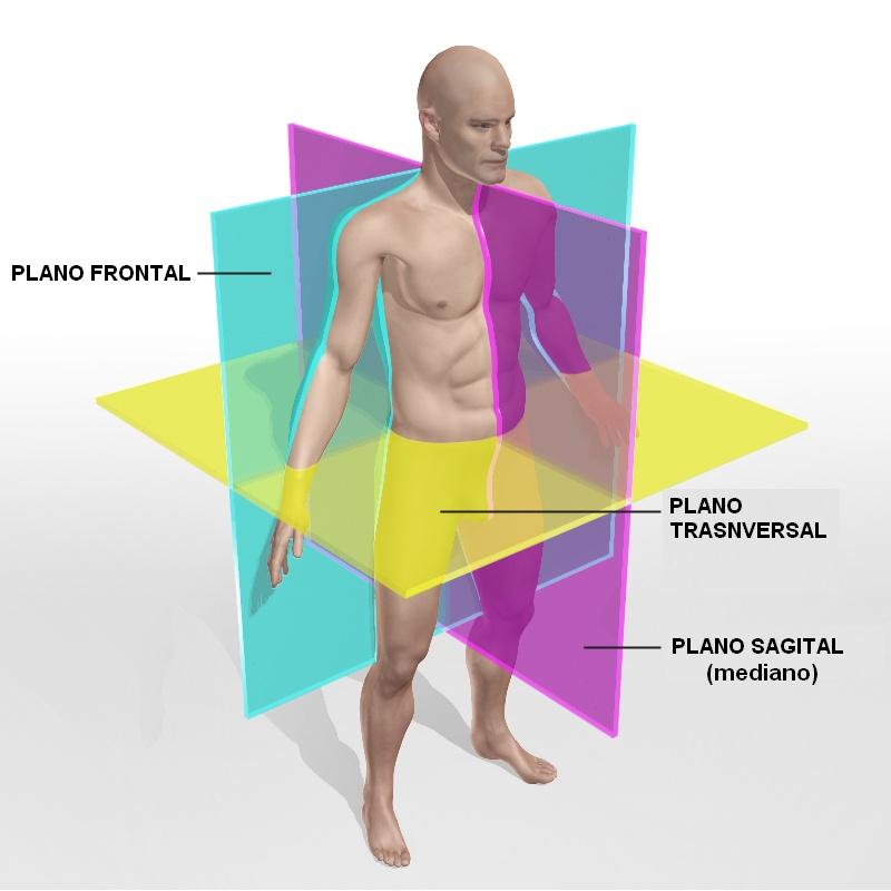 anatomia mapa conceptual AGOS 15