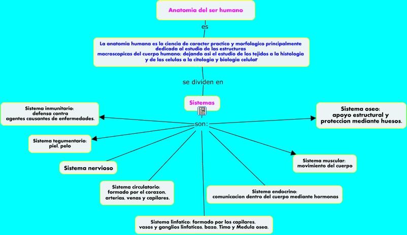 anatomia humana 4 A