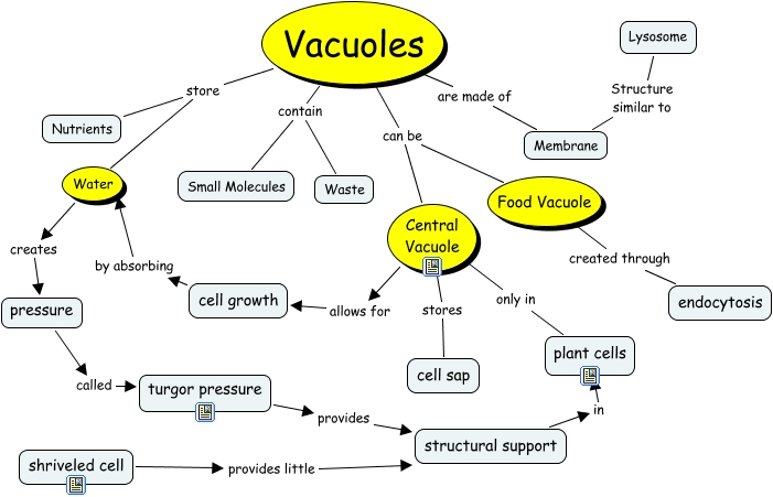 Vacuole Blue - What is the structure and function of vacuoles