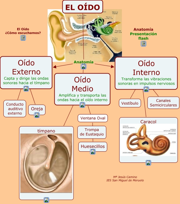 TC de oido  Tomografia Computada LicAlejandra Galvez